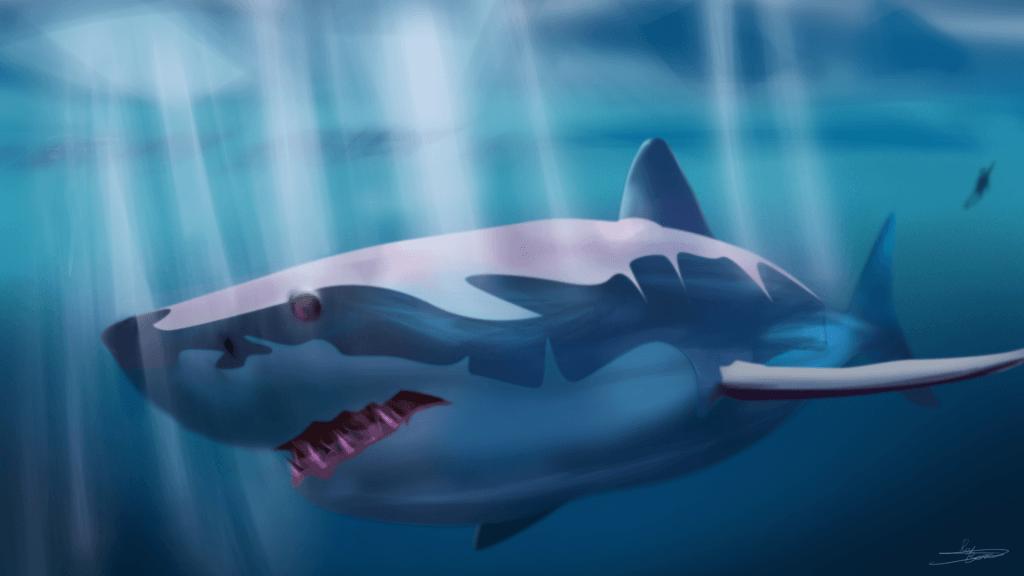 White Shark2